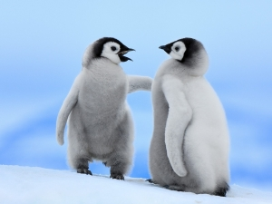 Good-Conversation-Emperor-Penguins-Snow-Hill-Island-Antarctica